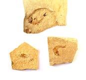 Fósiles 0014 Foto de archivo libre de regalías
