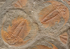 Fósiles Imágenes de archivo libres de regalías