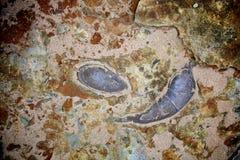 Fósiles en la playa Fotografía de archivo