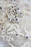 Fósiles marinas Foto de archivo libre de regalías