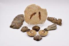 Fósiles y gemas en el fondo blanco imagen de archivo