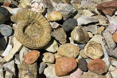 Fósiles y piedras l Imagenes de archivo
