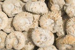 Fósseis Foto de Stock Royalty Free