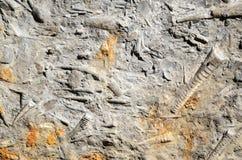Fósseis Imagens de Stock
