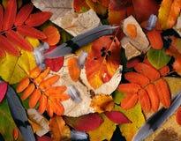 Fósseis, folhas & penas Imagem de Stock