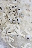 Fósseis marinhos Foto de Stock Royalty Free