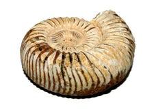 Fóssil fotografia de stock