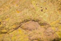 Fóssil bivalve do shell do setor mineiro Shell antigo do molusco fotos de stock royalty free