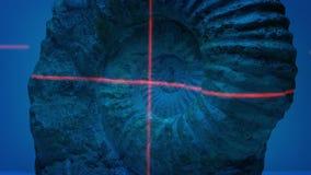 Fóssil da amonite feito a varredura com laser video estoque