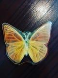 Fóssil da borboleta foto de stock royalty free