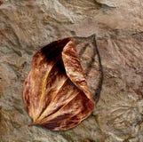 Fóssil da folha Imagens de Stock