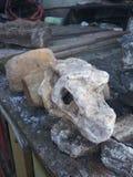 Fóssil da lama da rocha do dinossauro fotos de stock