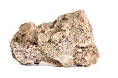 Fóssil do coral do favo de mel Fotos de Stock Royalty Free