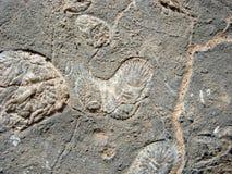 Fóssil do Paramecium na rocha Foto de Stock