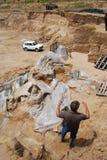 Fóssil gigantesco Fotografia de Stock
