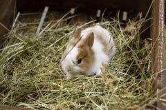 Föda upp husdjur, omsorg för djur, omsorg och ansvar av folk royaltyfria foton