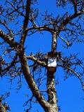 Föda upp skjul för fåglar Royaltyfria Foton