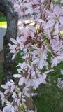 Födelse av våren Royaltyfria Bilder
