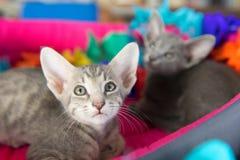 Födelsedag med små kattungar arkivfoton