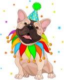 födelsedagbulldoggfransman s Royaltyfria Bilder