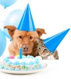 födelsedagdeltagarehusdjur Royaltyfri Bild