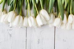 Födelsedaggåva, naturliga vita tulpan på det vita brädet Royaltyfri Foto