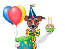 Födelsedaghund fotografering för bildbyråer