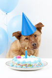 födelsedaghund royaltyfri bild
