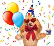 Födelsedaghund med ballonger och en muffin. Arkivfoton