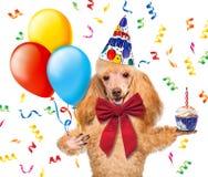 Födelsedaghund med ballonger och en muffin. Royaltyfri Foto
