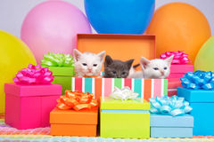 Födelsedagkattungar royaltyfria foton