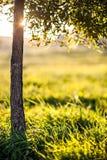 Födelsen av en ny dag i natur fotografering för bildbyråer