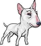 föder upp tjurhundterrieren Royaltyfri Fotografi
