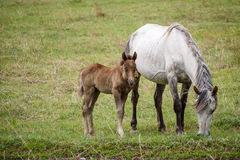 Föl och häst i ängen Royaltyfri Bild