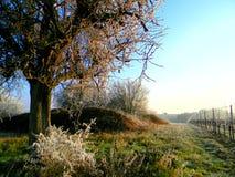 Följ träden Royaltyfri Foto