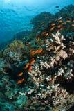 följa för fisk Royaltyfria Foton