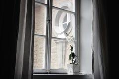 fönster royaltyfria bilder