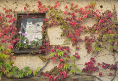 Fönster av ett gammalt vitt hus på den medeltida byn Perouges med c Arkivbild