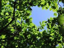 Fönster av himmel mellan eksidor royaltyfria foton