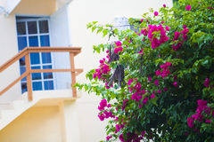 Fönster/balkong med rosa blommor Royaltyfri Foto