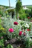 fönster för textur för bakgrundsdetalj trägammalt Gräs och blommor arkivbild