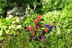 fönster för textur för bakgrundsdetalj trägammalt Gräs och blommor royaltyfri foto