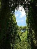 Fönster i djungeln arkivbilder