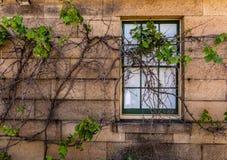 Fönster i sandstenvägg royaltyfria bilder