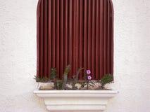 Fönster med blomkrukan och kaktuns royaltyfria foton
