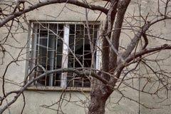 Fönster med brutet exponeringsglas och träd med kala filialer Fotografering för Bildbyråer