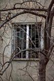 Fönster med brutet exponeringsglas och träd med kala filialer Royaltyfri Foto