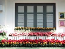 Fönster med flora Arkivbild