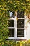 Fönster med murgrönaen Royaltyfria Bilder