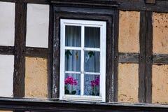 Fönster med orkidér på fönstret Arkivfoto